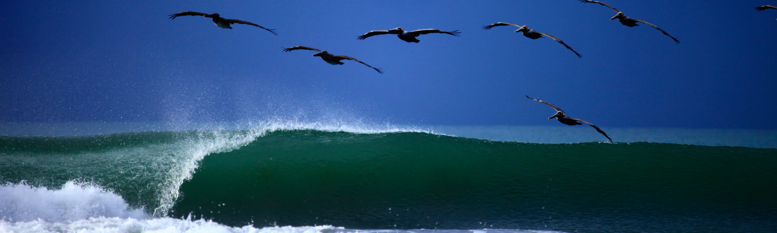 surf-costa-rica-pelican-waves